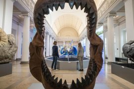 The babies of megalodon sharks were cannibals in the womb