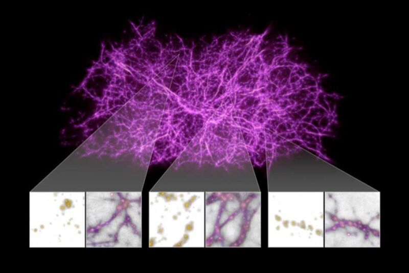 Reconstructing the cosmic web - the vast network of filamentous structures of matter that stretches across the universe - modeled on the growth patterns of slime mold.